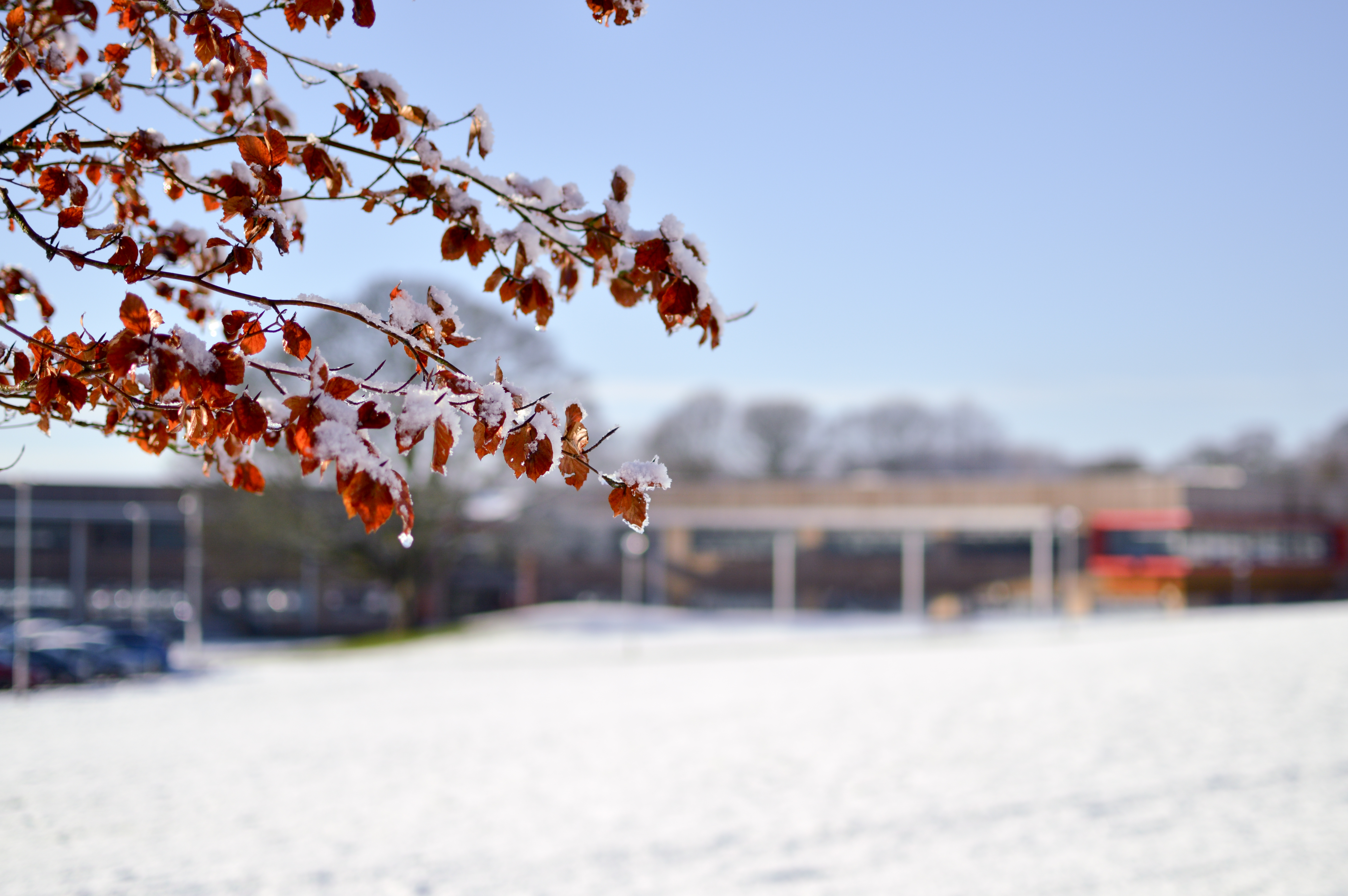Winter at Witton Park Academy